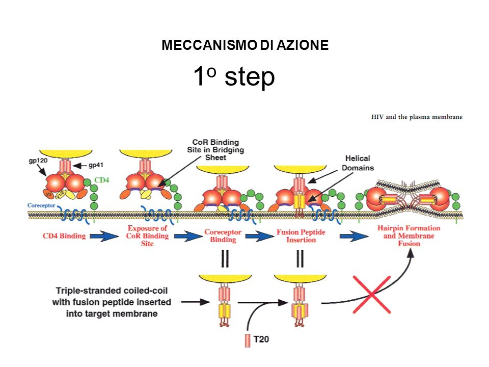 MECCANISMO DI AZIONE 1o step