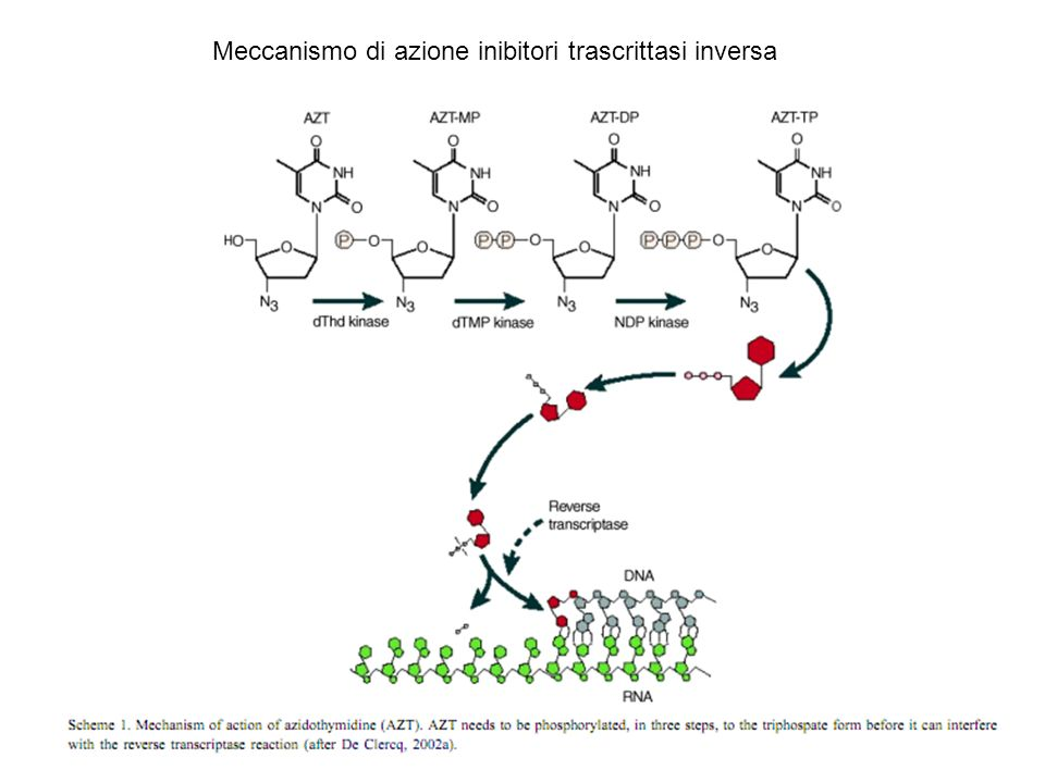 Meccanismo di azione inibitori trascrittasi inversa