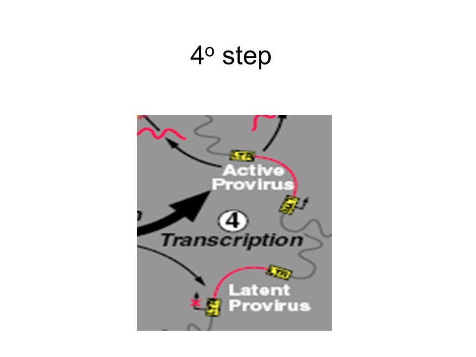 4o step