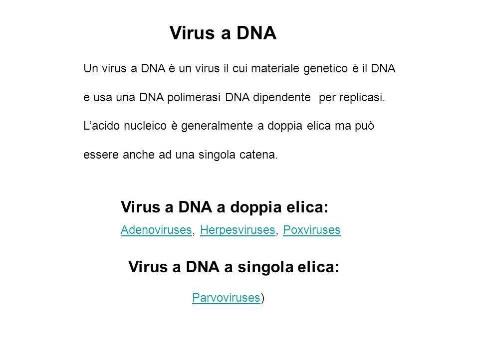 Virus a DNA Virus a DNA a doppia elica: Virus a DNA a singola elica: