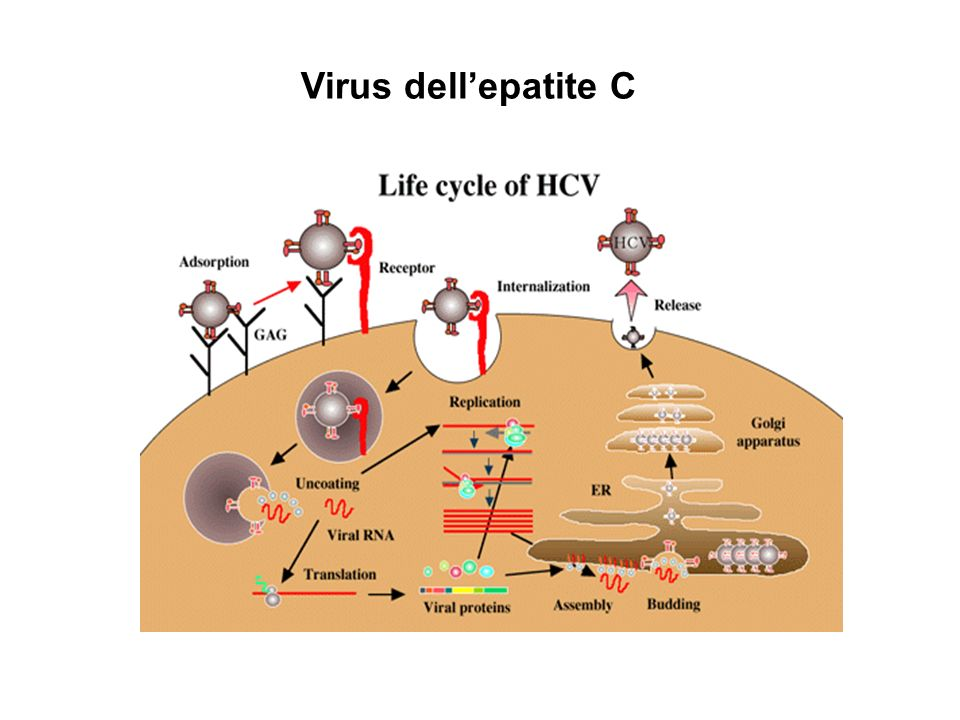 Virus dell'epatite C