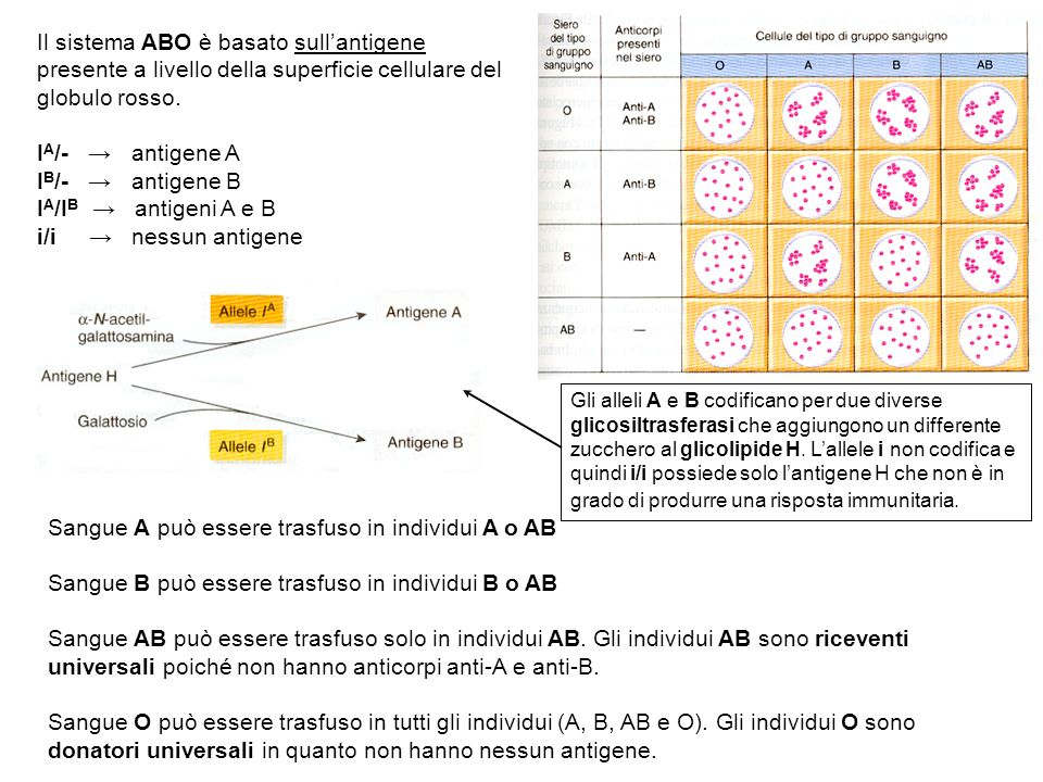 Sangue A può essere trasfuso in individui A o AB