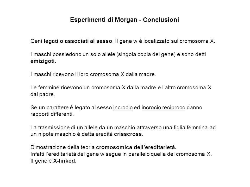 Esperimenti di Morgan - Conclusioni