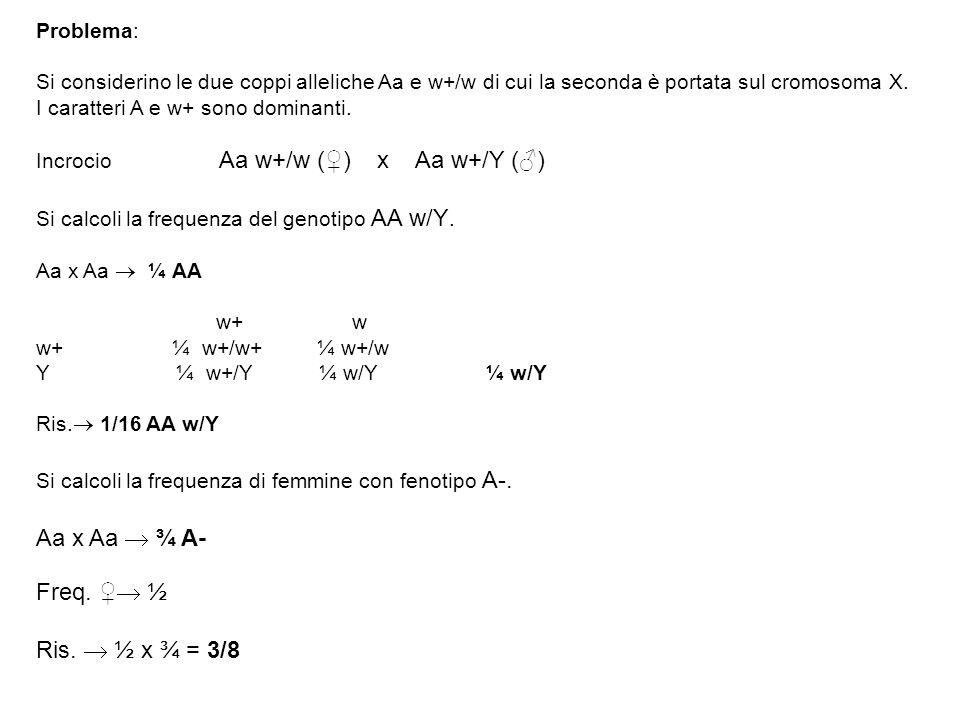 Aa x Aa  ¾ A- Freq. ♀ ½ Ris.  ½ x ¾ = 3/8 Problema: