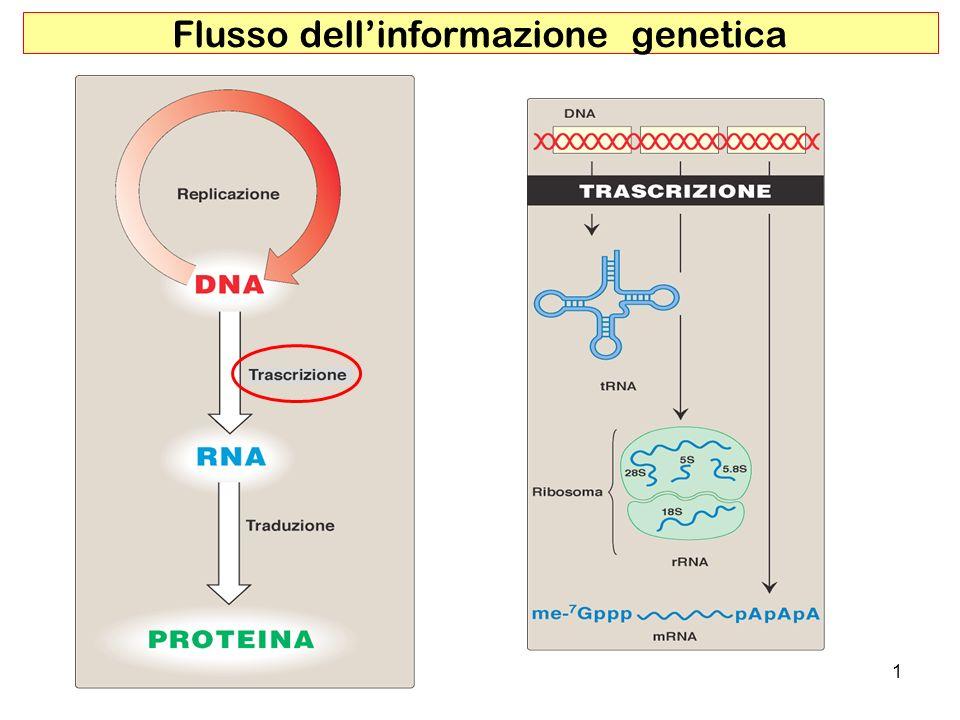 Flusso dell'informazione genetica