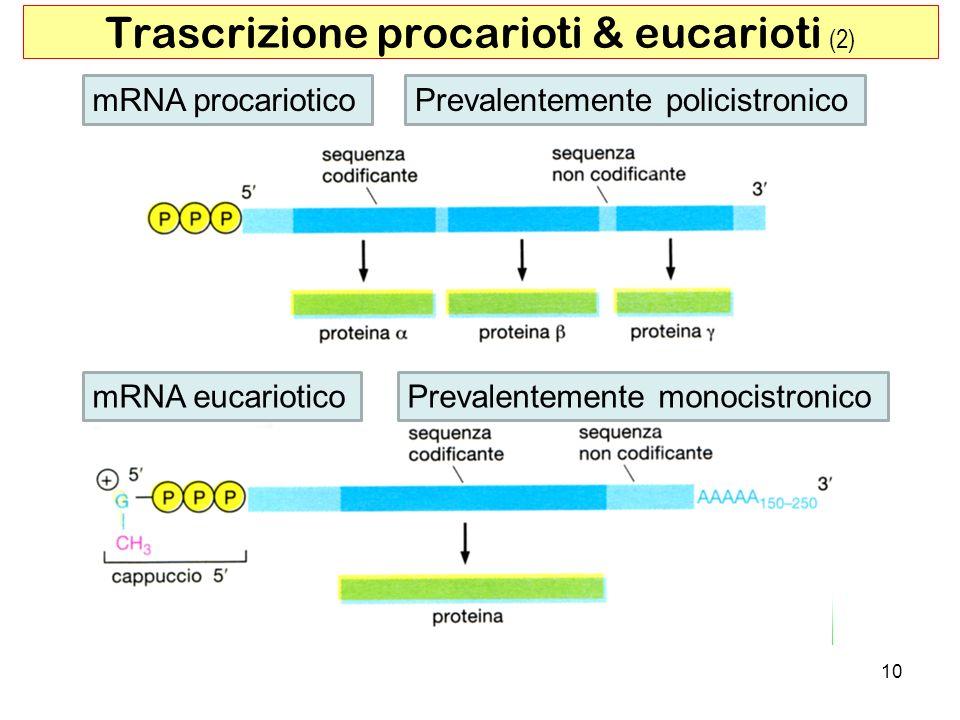 Trascrizione procarioti & eucarioti (2)