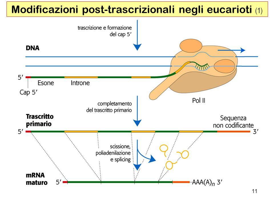 Modificazioni post-trascrizionali negli eucarioti (1)