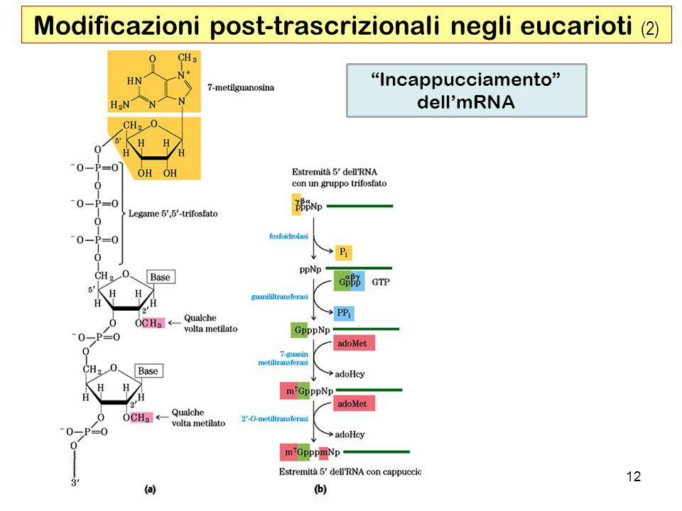 Modificazioni post-trascrizionali negli eucarioti (2)