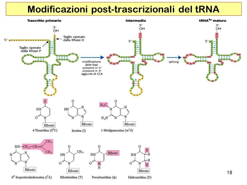 Modificazioni post-trascrizionali del tRNA