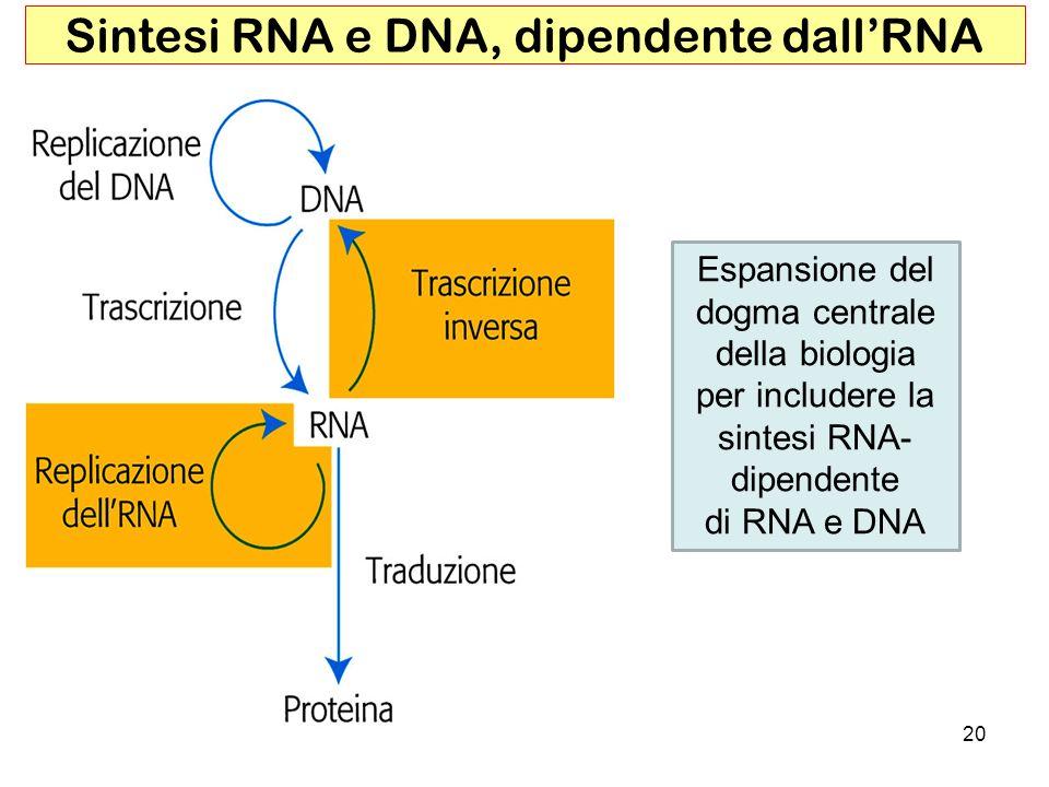 Sintesi RNA e DNA, dipendente dall'RNA
