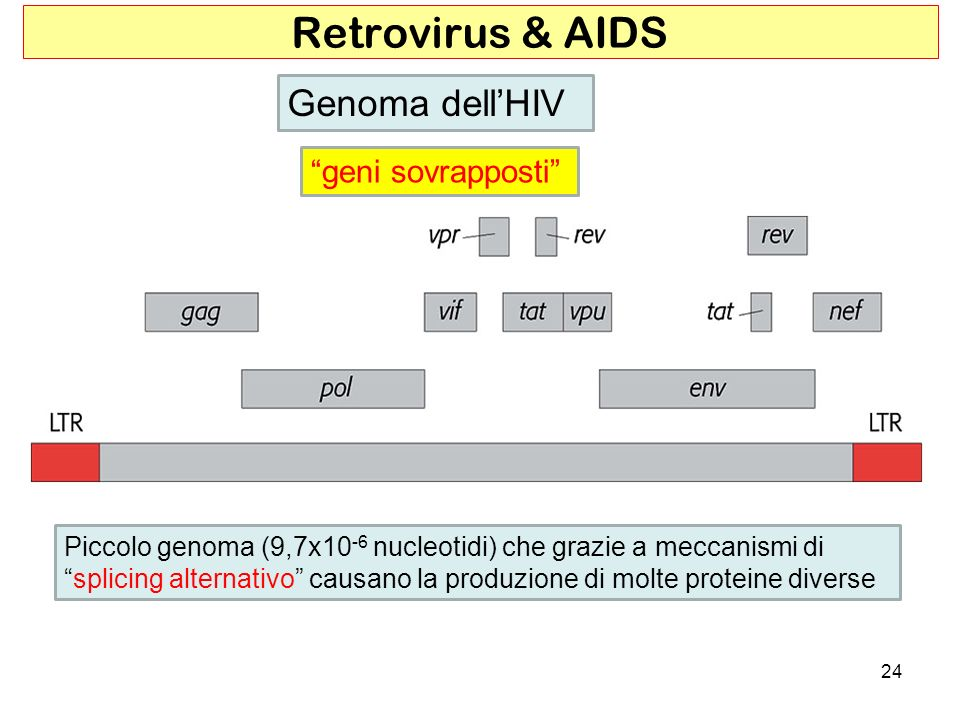 Retrovirus & AIDS Genoma dell'HIV geni sovrapposti