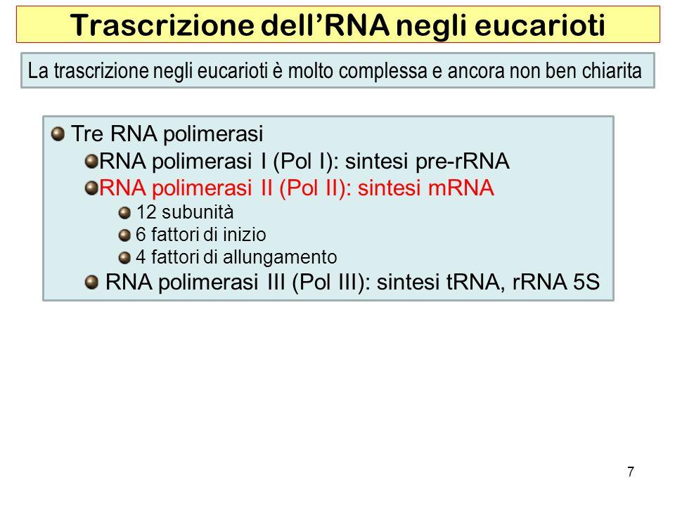 Trascrizione dell'RNA negli eucarioti