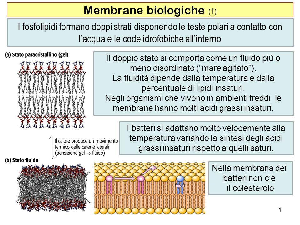 Membrane biologiche (1)