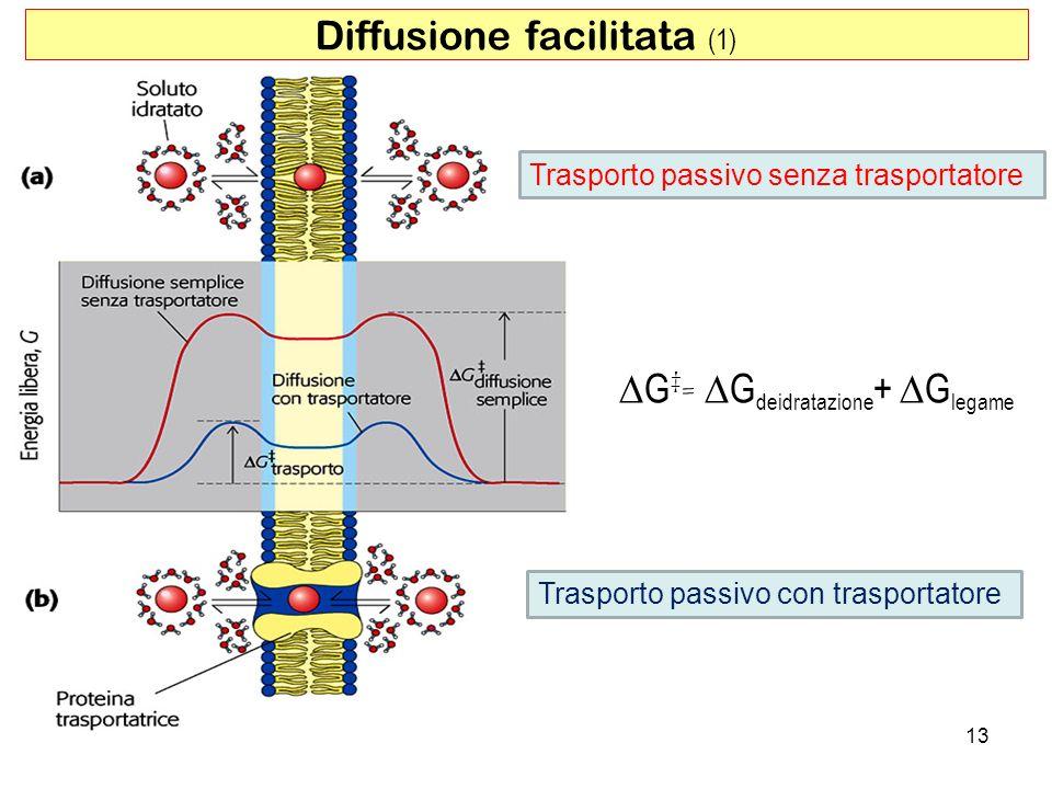 Diffusione facilitata (1)