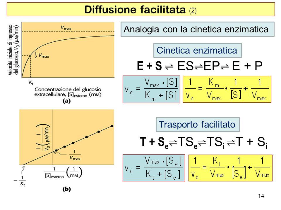 Diffusione facilitata (2)