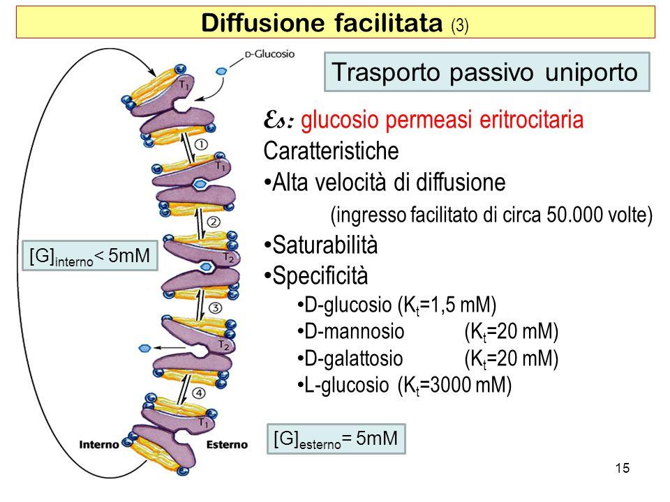Diffusione facilitata (3)