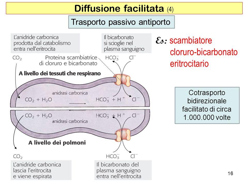 Diffusione facilitata (4)