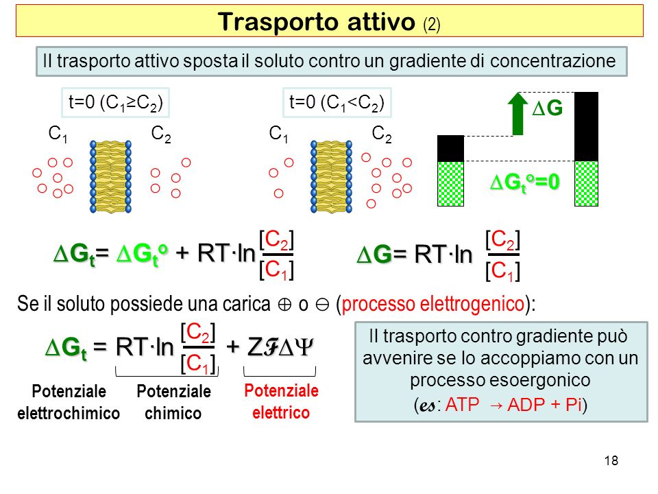 Trasporto attivo (2) DGt= DGto + RT·ln DG= RT·ln DGt = RT·ln + ZFDY ○