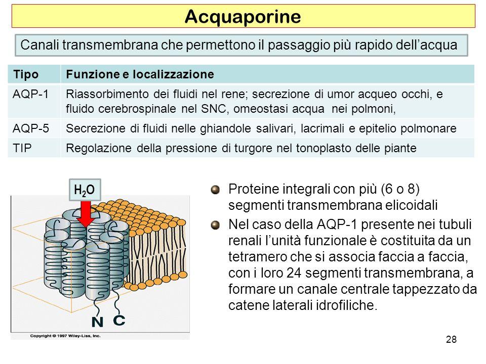 Acquaporine Canali transmembrana che permettono il passaggio più rapido dell'acqua. Tipo. Funzione e localizzazione.