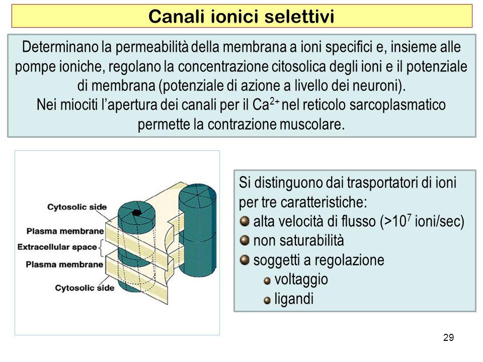 Canali ionici selettivi