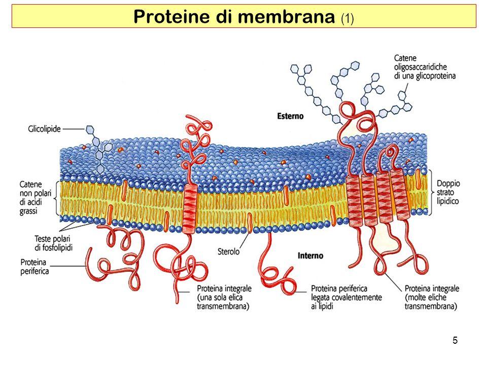 Proteine di membrana (1)