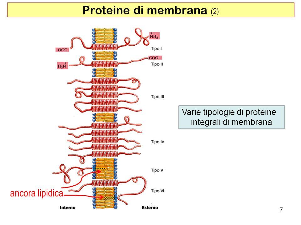 Proteine di membrana (2)