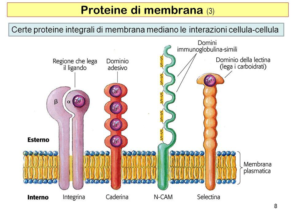 Proteine di membrana (3)