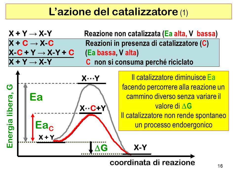 L'azione del catalizzatore (1)