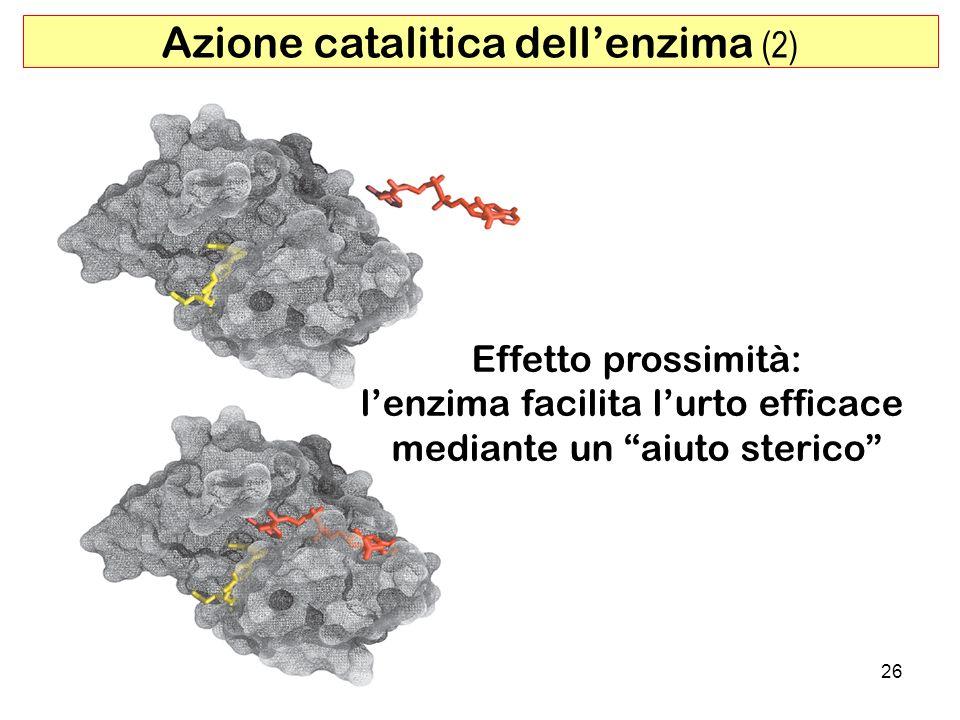 Azione catalitica dell'enzima (2)