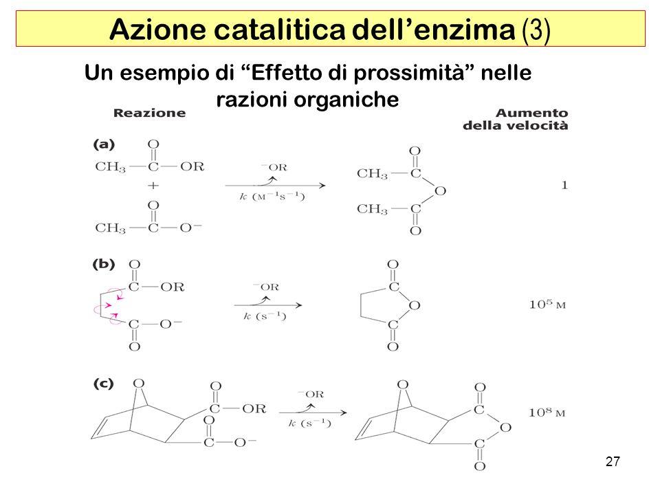 Azione catalitica dell'enzima (3)