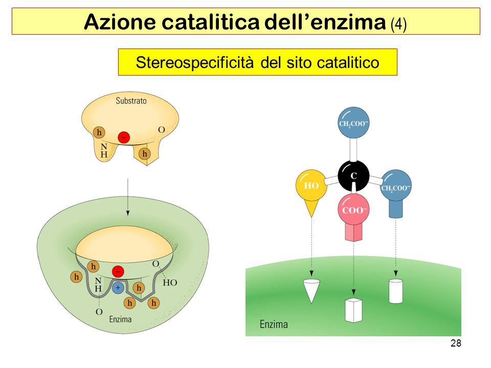 Stereospecificità del sito catalitico