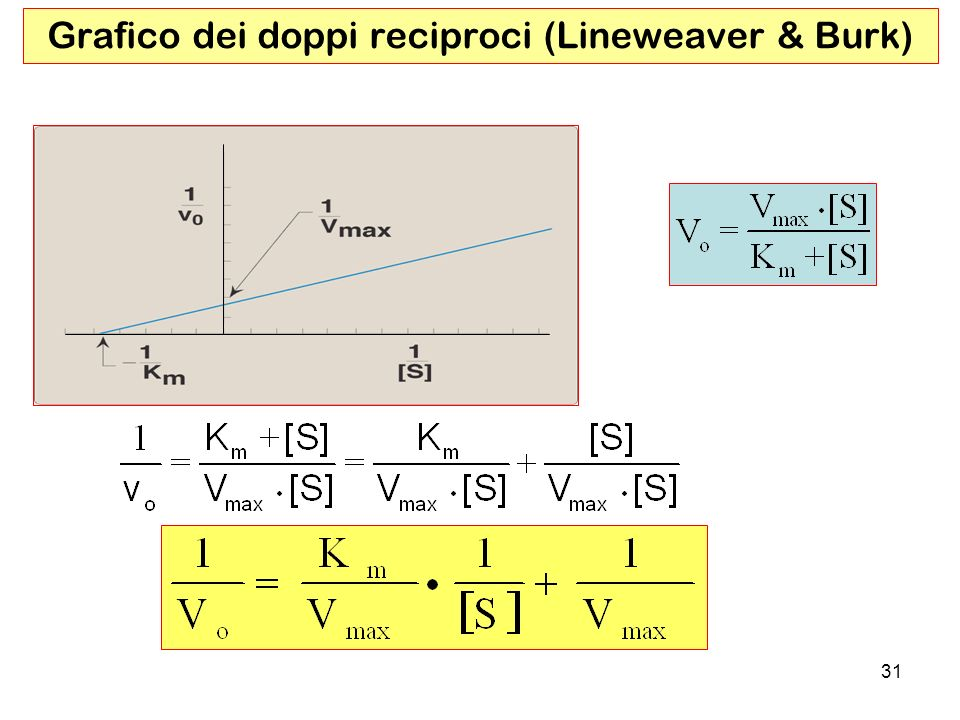 Grafico dei doppi reciproci (Lineweaver & Burk)