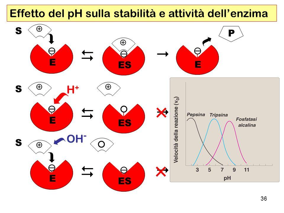 Effetto del pH sulla stabilità e attività dell'enzima