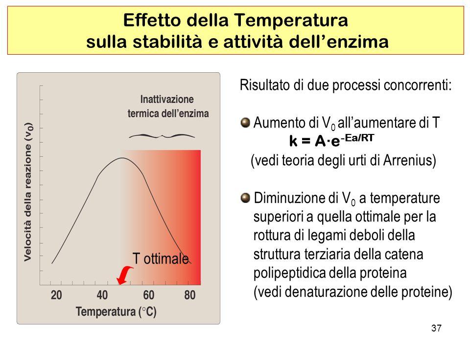 Effetto della Temperatura sulla stabilità e attività dell'enzima