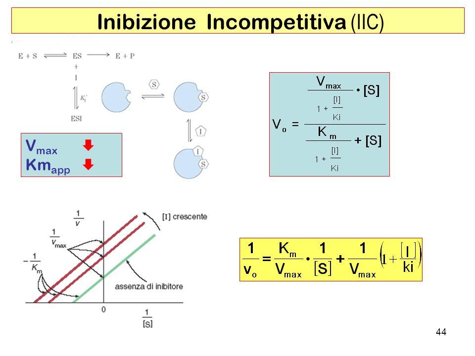 Inibizione Incompetitiva (IIC)