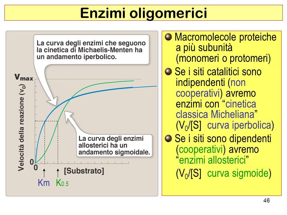 Enzimi oligomerici Macromolecole proteiche a più subunità (monomeri o protomeri)