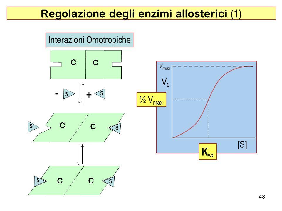 Regolazione degli enzimi allosterici (1)