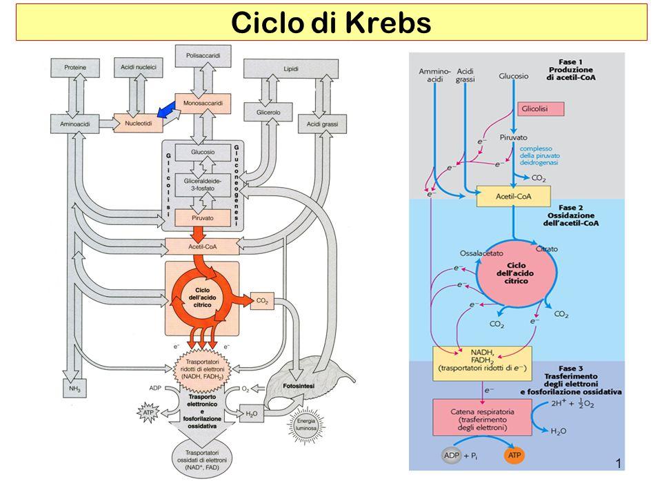 Ciclo di Krebs