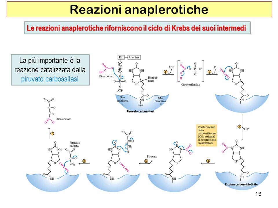 Reazioni anaplerotiche