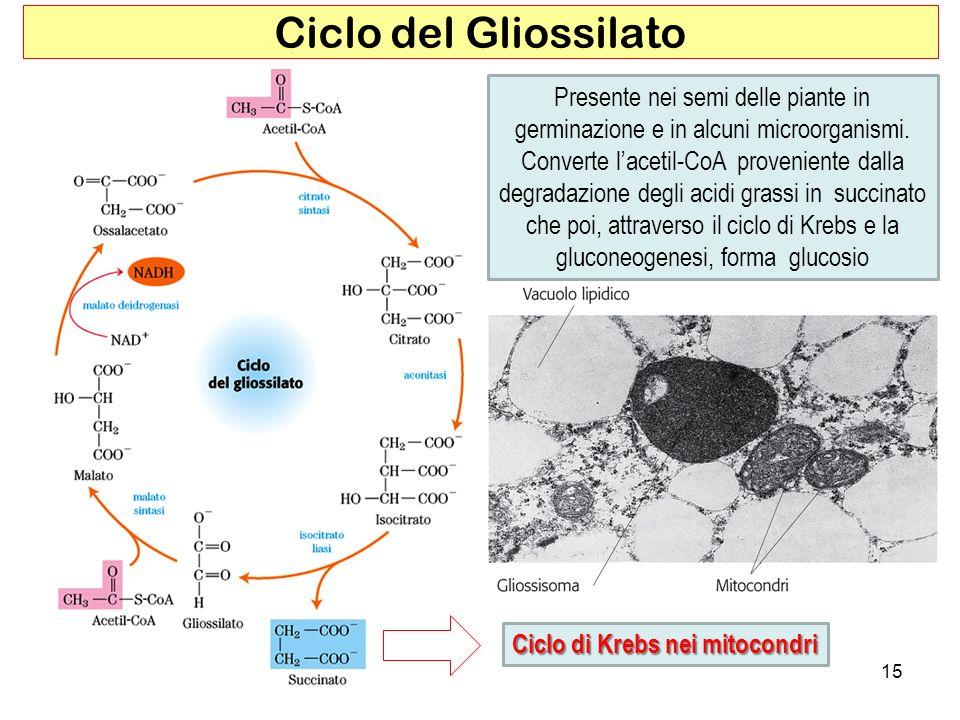 Ciclo del Gliossilato