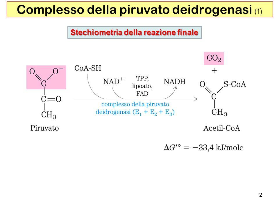 Complesso della piruvato deidrogenasi (1)