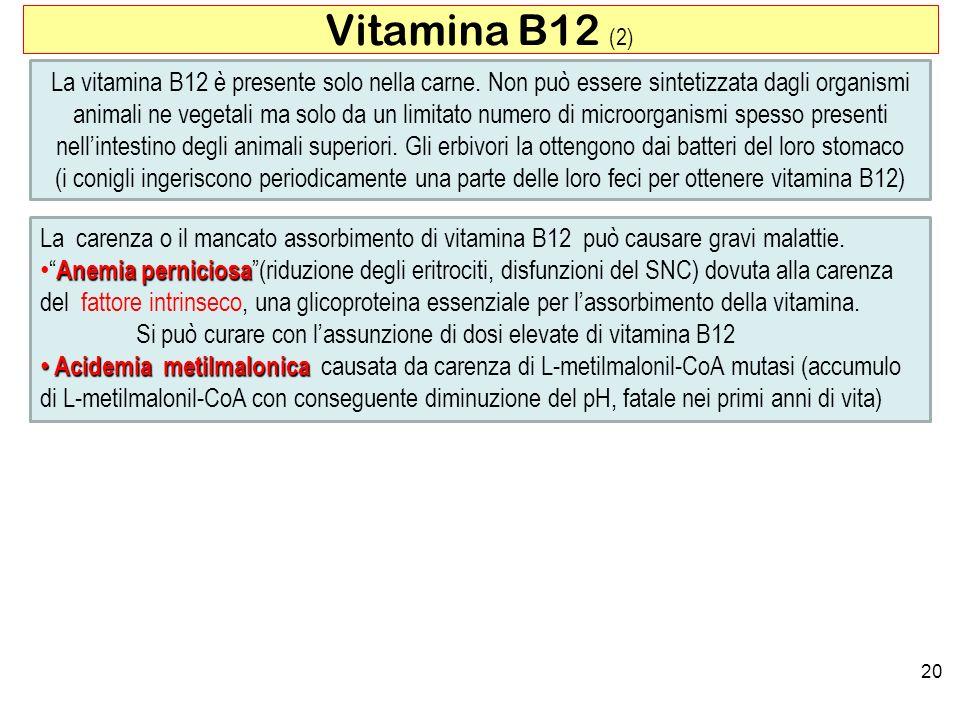 Vitamina B12 (2)