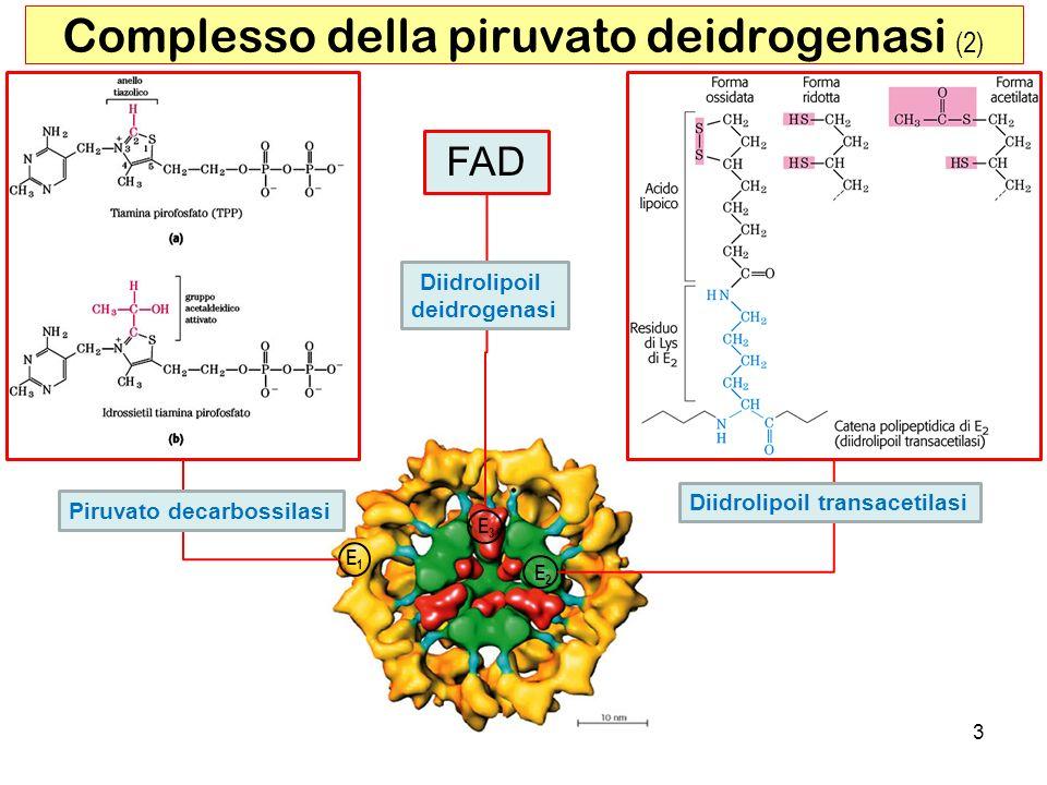 Complesso della piruvato deidrogenasi (2)
