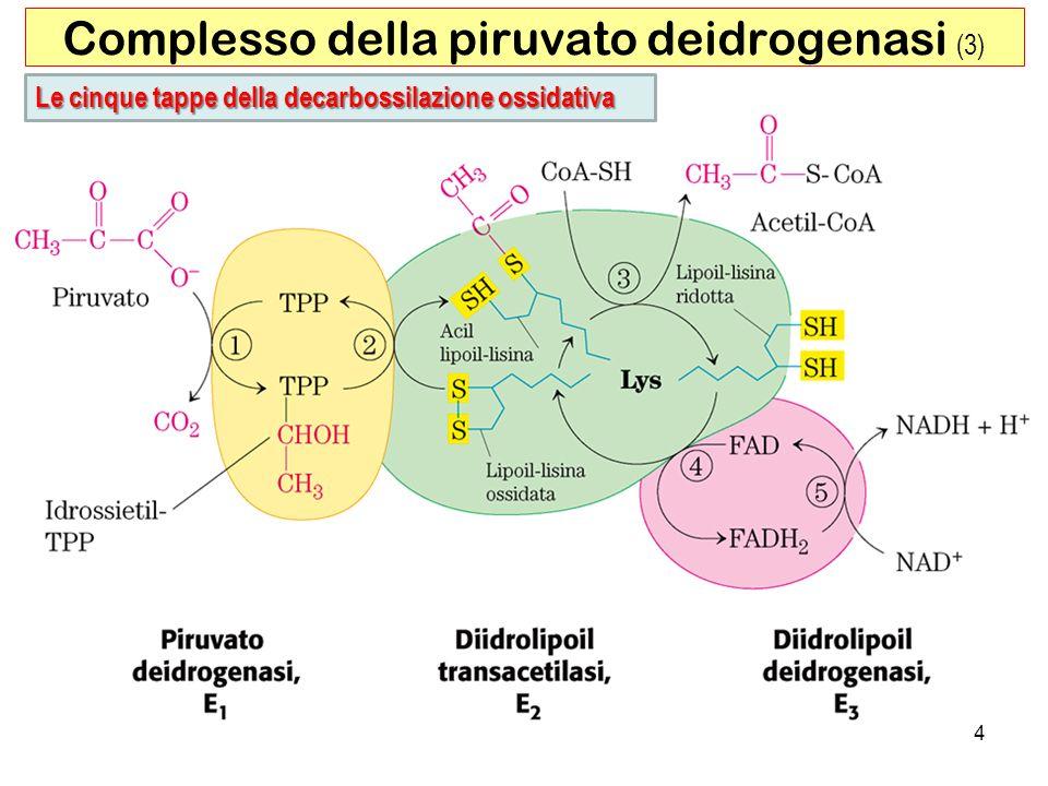 Complesso della piruvato deidrogenasi (3)