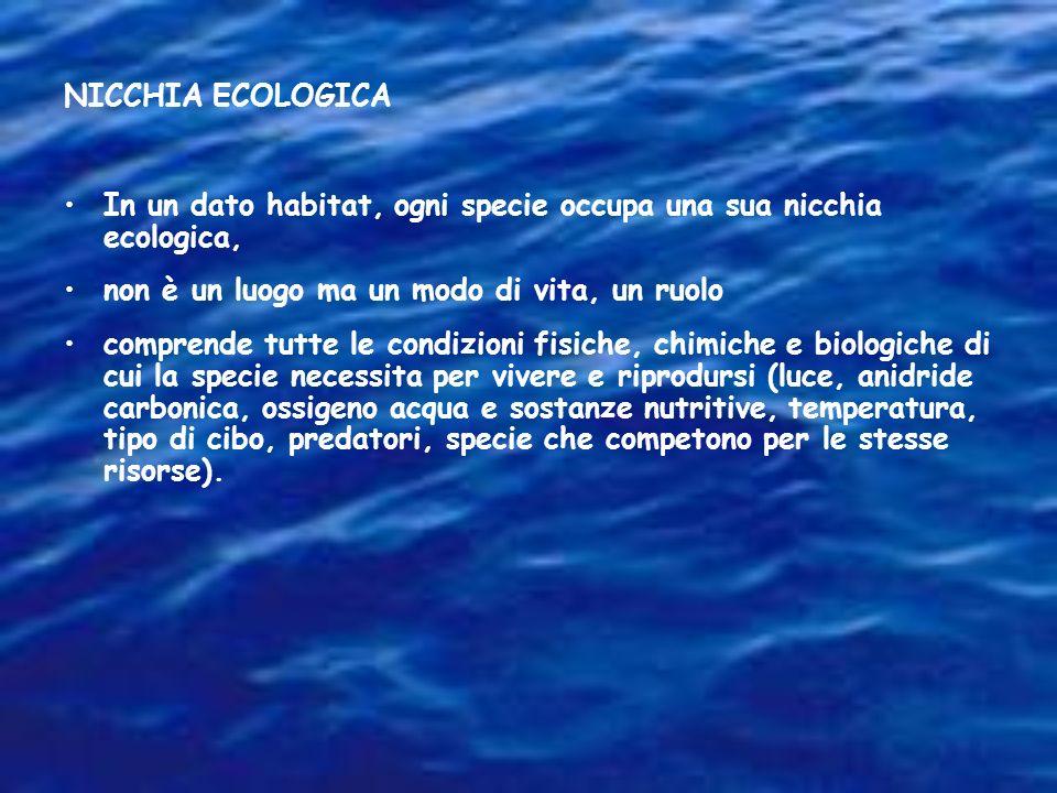 NICCHIA ECOLOGICA In un dato habitat, ogni specie occupa una sua nicchia ecologica, non è un luogo ma un modo di vita, un ruolo.