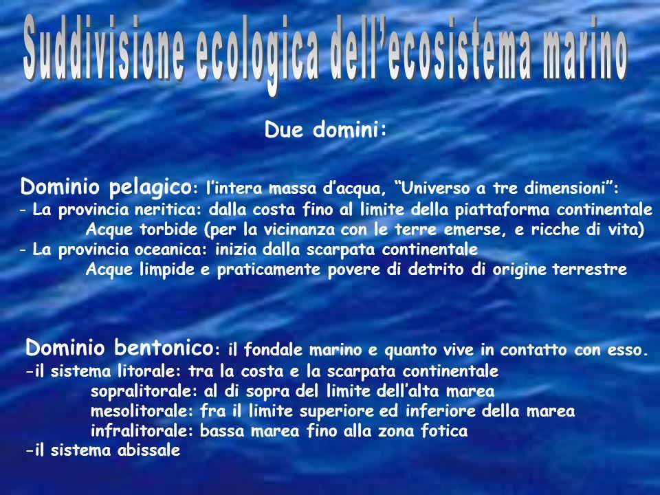 Suddivisione ecologica dell'ecosistema marino
