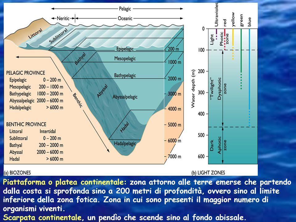 Piattaforma o platea continentale: zona attorno alle terre emerse che partendo dalla costa si sprofonda sino a 200 metri di profondità, ovvero sino al limite inferiore della zona fotica. Zona in cui sono presenti il maggior numero di organismi viventi.