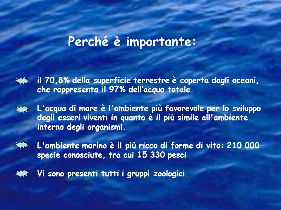 Perché è importante: il 70,8% della superficie terrestre è coperta dagli oceani, che rappresenta il 97% dell'acqua totale.
