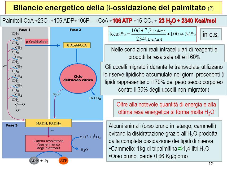 Bilancio energetico della b-ossidazione del palmitato (2)