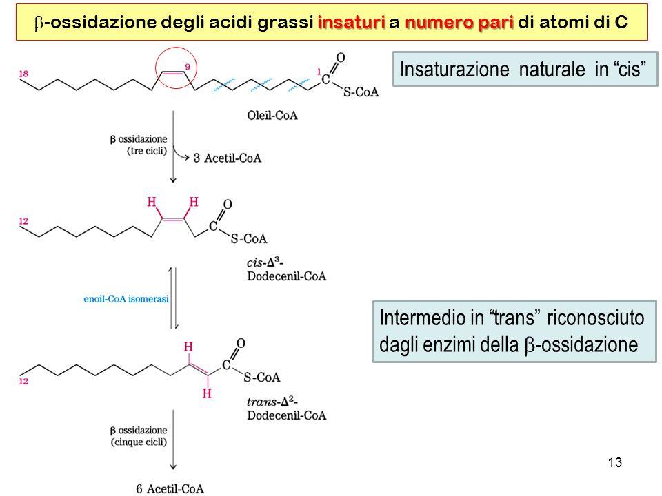 b-ossidazione degli acidi grassi insaturi a numero pari di atomi di C
